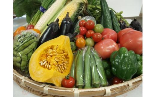 秦野産野菜イメージ