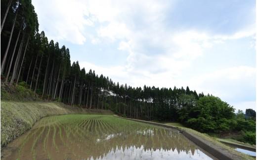 田植え後の田圃。ここから稲刈りまで、大雨やイノシシ等の獣害、日照りや病気対策で忙しい日々が続きます。
