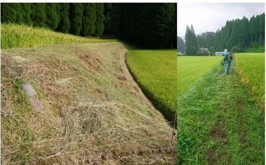 田圃の畔(あぜ)周辺が草で覆われ、大雨等で崩れたりしない様、定期的な除草(草刈り)を行います。草と人間との競争です(笑)