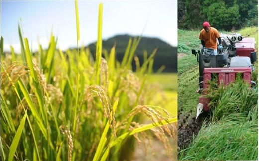 稲穂が頭(こうべ)を垂れ、黄金色に色づいたら、いよいよ稲刈り!刈った稲は脱穀し、乾燥後に専用の貯蔵庫にて保管されます。