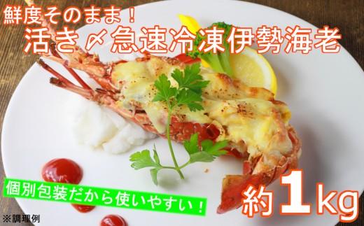 B708 いすみ市産 鮮度そのまま!活き〆冷凍伊勢海老!!B