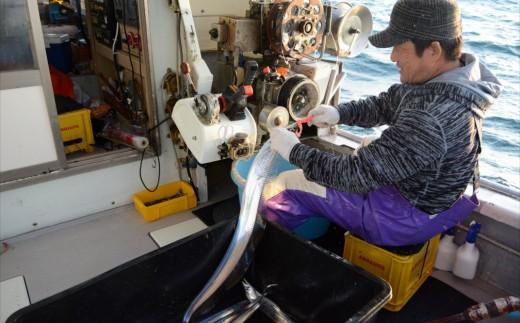 臼杵では、一本釣り漁法で太刀魚を釣るため、モノがいいのです!