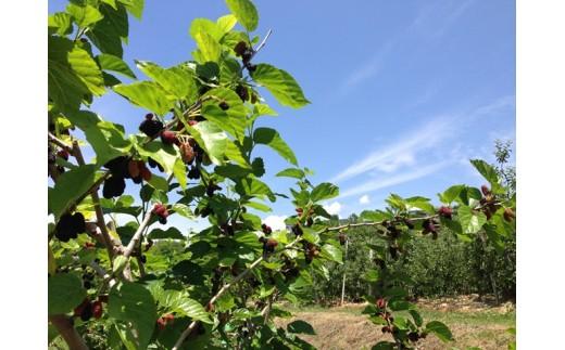 晴天率の高い信州上田に農場があります。