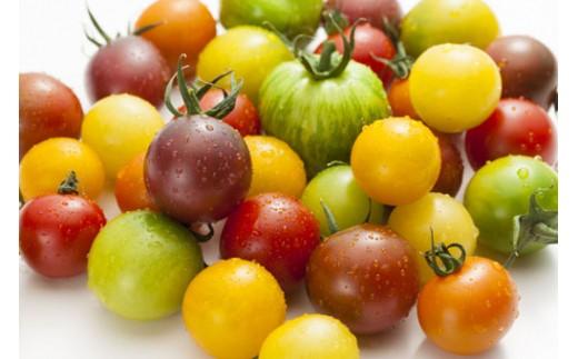 GOKOとまとむら「カラフルミニトマト」4種以上の詰合せ