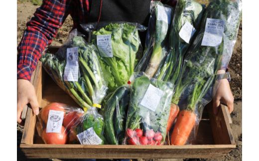 五人坊主 大島農園 おススメの有機野菜詰め合わせ