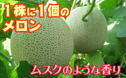 1-98 吉田温室メロン農園の千葉アクアメロン(L玉1.4kg以上)1個