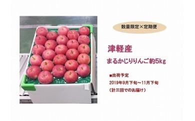 【定期便3回】津軽産まるかじりりんご(約5kg23~25個)