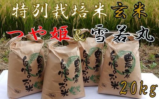 ファミリー農園吉永の【元年産・玄米】特別栽培米セット20kg(つや姫&雪若丸)