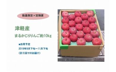 【定期便3回】津軽産まるかじりりんご(約10kg 46~50個)