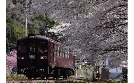 渡良瀬川の渓谷に沿って走る「わたらせ渓谷鐵道」の車窓からは、四季折々の自然が満喫できます。