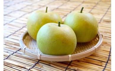 【期間限定】【周南市】エコファーマー認定農園産 梨(二十世紀・2.5Kg)