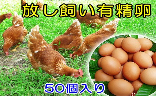A-705 森田農場放し飼い「有精卵」45個+破卵保障5個入り