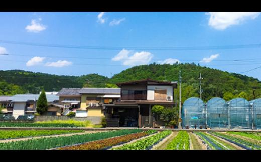 京野菜マイスターがお届けする「京の旬野菜」セット【冬】寄附額1万円コース