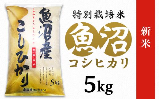 C2-051新潟県魚沼産特別栽培米コシヒカリ(長岡川口地域)5kg