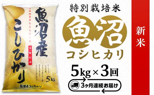 【3ヶ月連続お届け】魚沼産コシヒカリ特別栽培米5kg【令和元年産】(長岡川口地域)