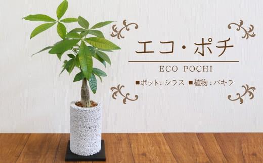 エコ・ポチ チムニー パキラ 観葉植物