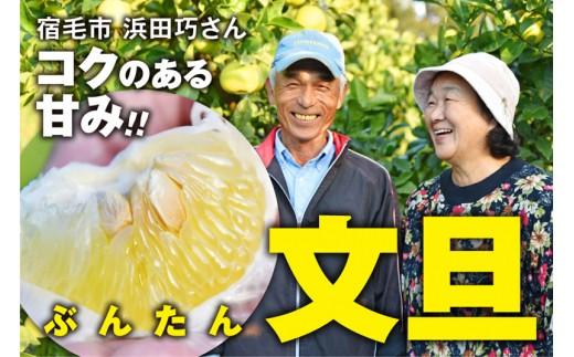コクのある甘みがたまらない浜田巧さんのこだわり文旦(贈答用5kg)