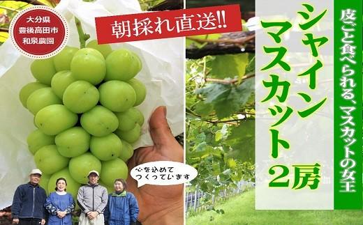E-40 【先行予約】特選シャインマスカット2房入り(1Kg以上)