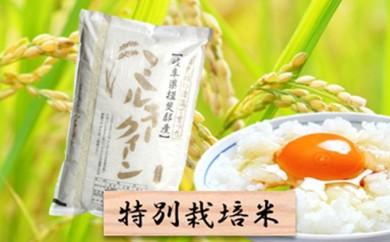 [№5644-0681]特別栽培米★精米10kg(分搗き可)または玄米11kg【ミルキークイーン】