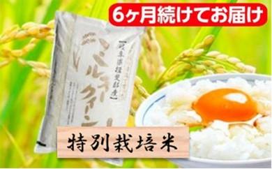 [№5644-0719]特別栽培米★[頒布会] 6カ月★毎月 白米5kg【ミルキークイーン】