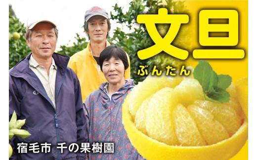 甘さと酸味のバランスにこだわり!千の果樹園の文旦(家庭用5kg)