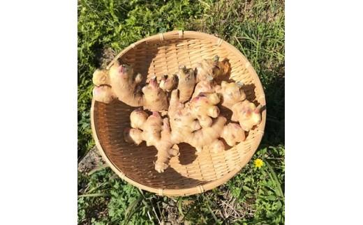 右側は親生姜で左側は平成30年11月に新たに収穫した生姜