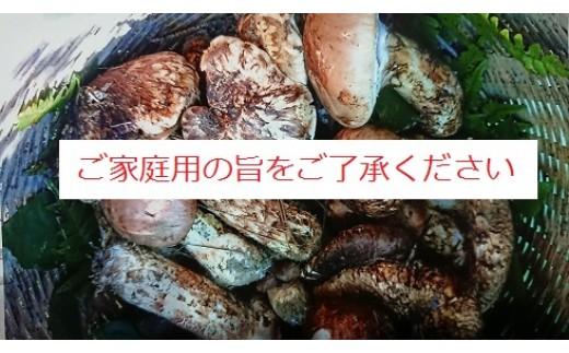 【090-05】信州伊那の松茸(訳あり品につきご家庭用です・先行予約)