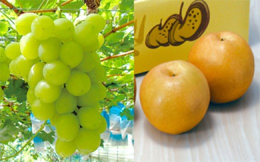 ぶどう・梨詰合せ<合計1.2㎏以上:種子田フルーツ> STK05