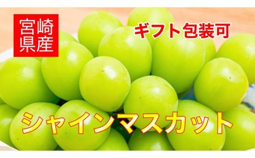 宮崎県産<シャインマスカット3~4房入り>1箱【C209】