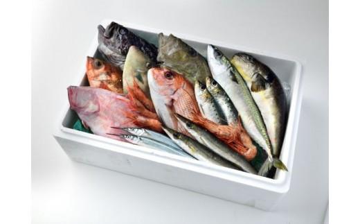 【輪島の魚屋直送】朝どれ!季節の鮮魚おまかせセット(小)<1月下旬以降お届け>