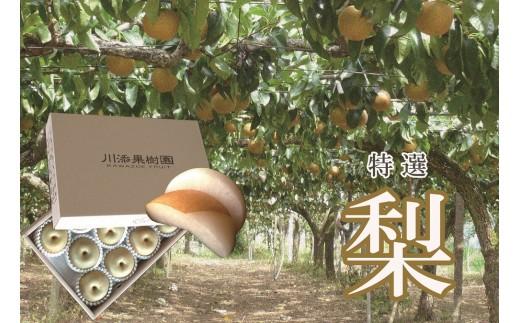 C-10 【旬の時期にお届け】 川添果樹園の特選梨 5kg