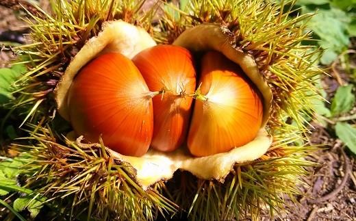 氷蔵熟成させた京丹波町産・丹波栗の豊かな甘みをお楽しみください。