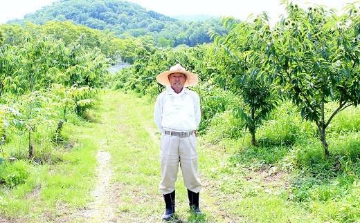 岩崎農園では様々な品種の栗が栽培されています。