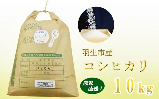 【令和元年産米】埼玉県羽生市産 コシヒカリ 10kg