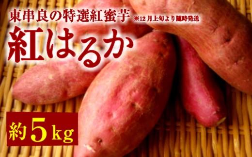 【10549】東串良の特選紅蜜芋紅はるか 5kg