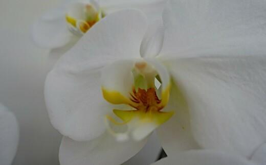 花の産地・鴻巣より心をこめてお届けします