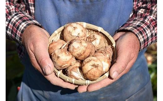子姫芋生産組合では、子姫芋の中で一番おいしい「孫芋」のみを厳選しお届けします!