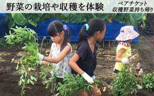 【020-001】館山の恵みたっぷり実感!農作業体験ペアチケット