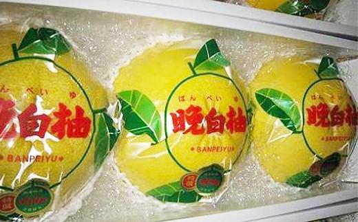 八代産 晩白柚 3玉 くまモンの箱入り