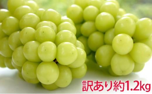 [№5729-0253]柳澤果樹園 シャインマスカット 約1.2kg 訳あり