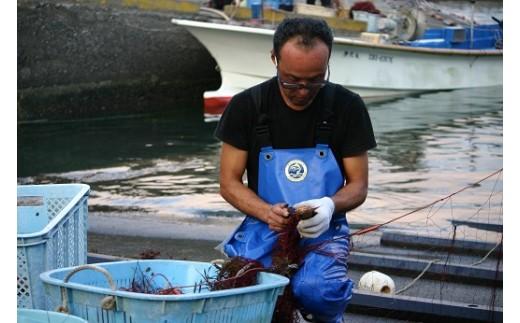 海老網漁の様子。詳しくは ↓↓動画↓↓ をご覧ください!