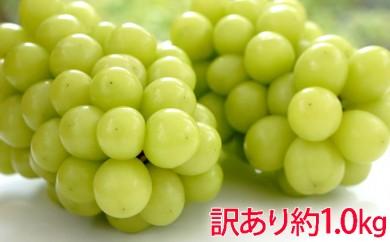 [№5729-0259]柳澤果樹園シャインマスカット約1.0kg訳あり