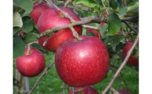 A-65 二戸産りんご 紅いわて 3キログラム