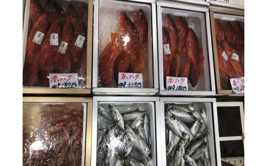 洋風な外観とはうらはらに、店内は鮮魚がずらり!