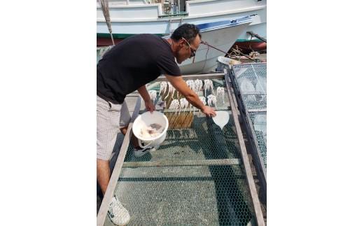 熟成後の塩辛は濃厚なイカの塩辛の旨味を味わうことができます。