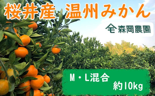 M-AC13.【先行予約】 桜井産 温州みかん M・L混合サイズ 10kg