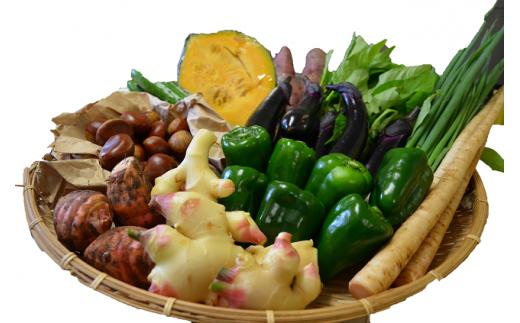 越知町産季節の野菜セット(年3回発送)