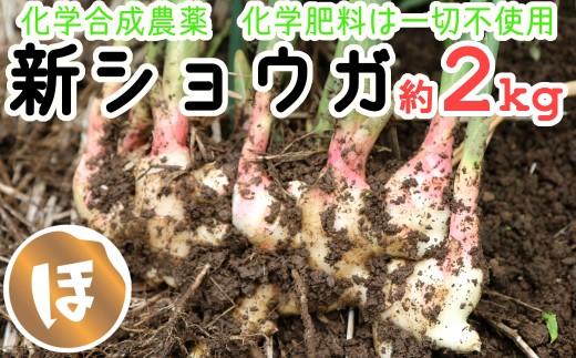 化学合成農薬・化学肥料は不使用の新ショウガ(約2kg)