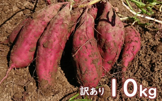 TA005【訳あり】西山きんとき芋(さつまいも)10kg