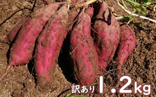 TA003【訳あり】西山きんとき芋(さつまいも)1.2kg